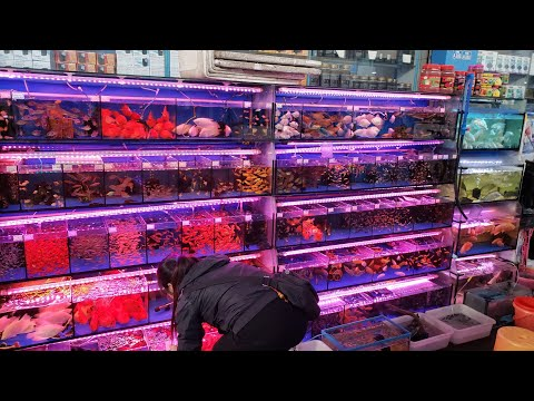 China Aquarium Fish Market Travel Vlog