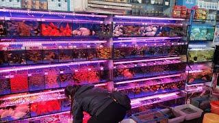 China Aquarium Fish Market Travel Vlog