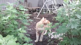 Мой рыжий кот,который все время от меня убегает.