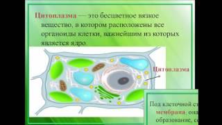Растительные клетки