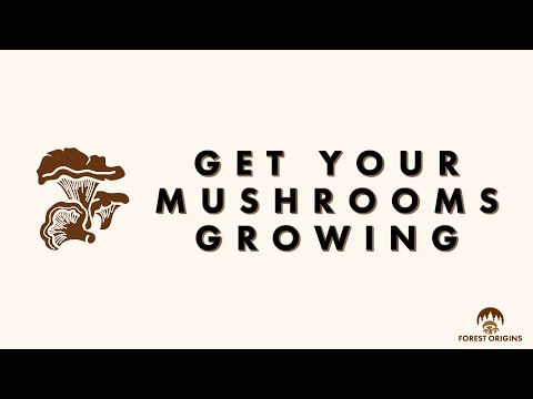 HOW TO SET UP YOUR MUSHROOM GROW KIT by FOREST ORIGINS - YouTube