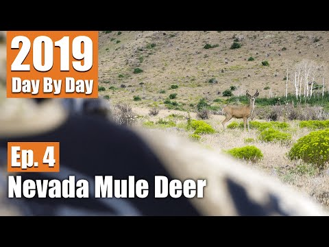I Can't Believe That...47 Yards | 2019 Nevada Mule Deer (Ep. 4)