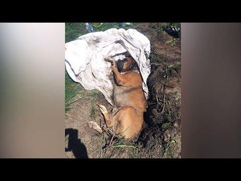 Disturbing Disturbing discovery: Dog found buried alive in Quebec