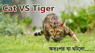 Top Funny Cat || Try Not To Laugh Challenge || বিড়ালের দুষ্টামি - ২০১৯ || Kabbo Cat