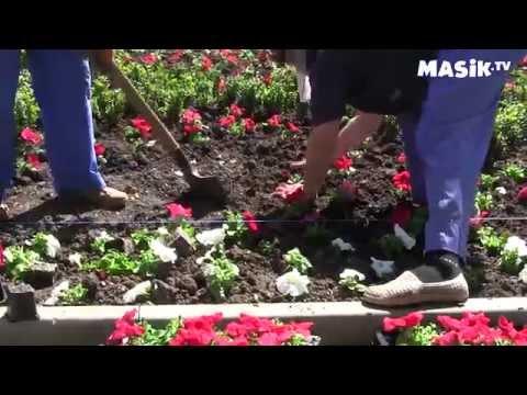 Посадка цветов на клумбах