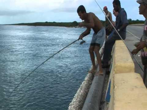 Causeway Giants - Shore Fishing