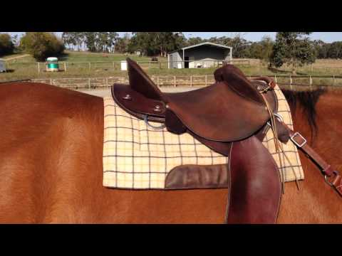 Kent Western Drafter Saddle Review - Australian Half-breed