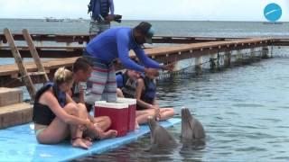 Dolphin Encounters Excursion | Roatan, Honduras