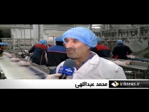 Iran Organic Chicken farming & Egg handling, Mahabad county پرورش مرغ و تخم مرغ ارگانيك مهاباد ايران