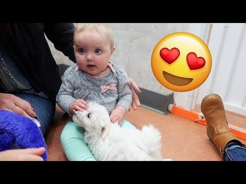 BABY MEETS PUPPY FOR THE FIRST TIME!