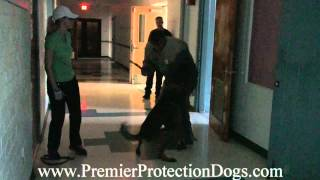 Premier Protection Dogs Training Night