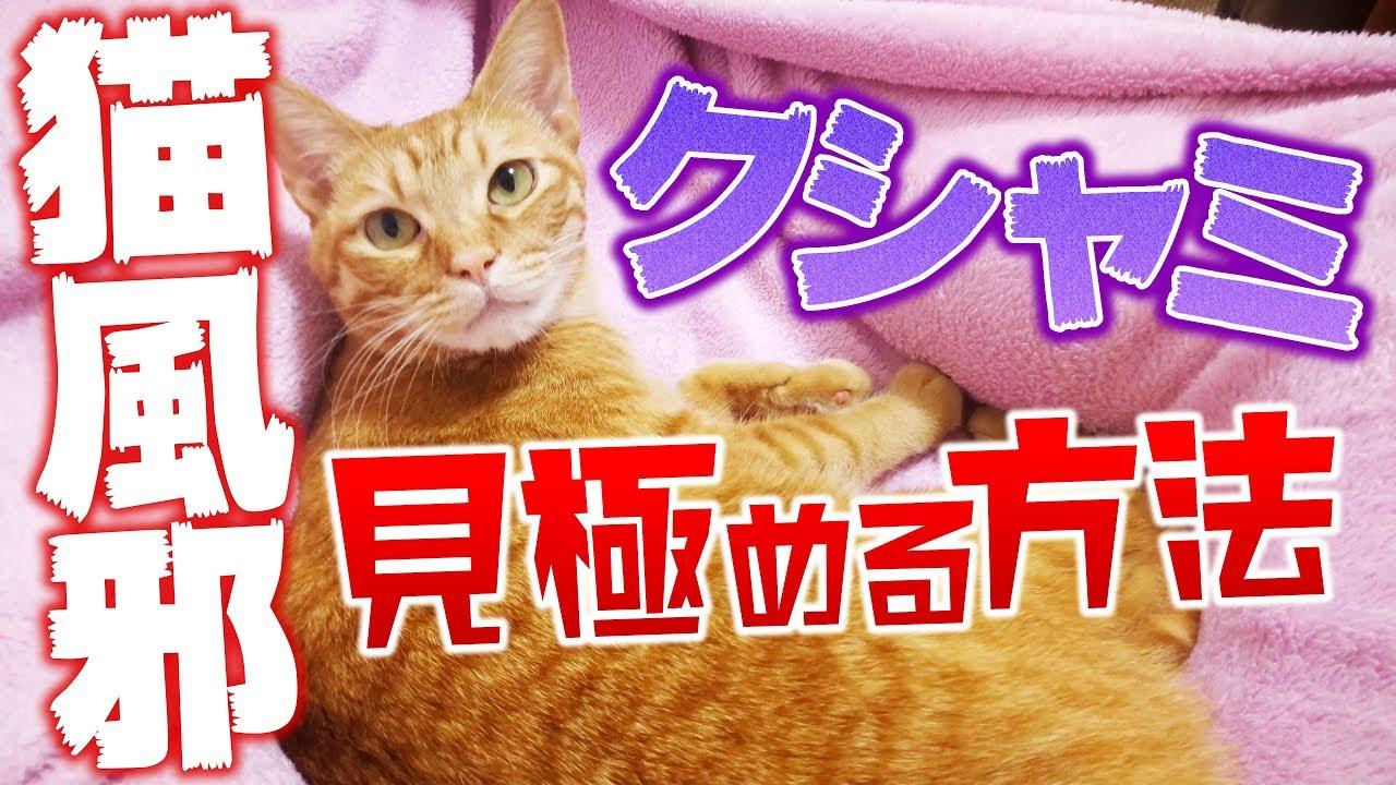 多い 猫 くしゃみ
