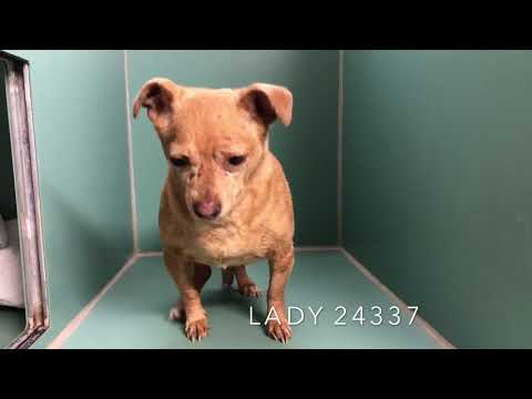 LADY 24337 lovely and looking for love