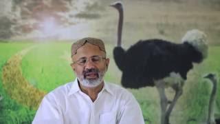 Ostrich Farming Breading or LiveStock (ep2) Raja Tahir Latif