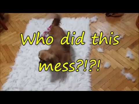Can You Guess Who Did This Mess? (the answer is at the end of the video)