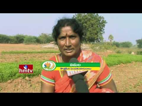 Success Story Of Curry Leaf Farming By Women Farmer | Mango Cultivation | Nela Talli | HMTV