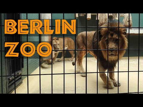 Berlin Zoo as seen by a Tourist (2015)