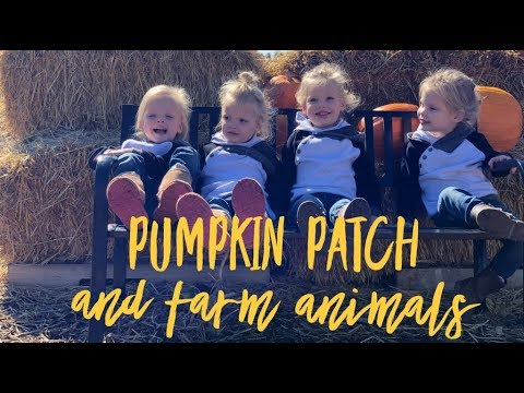 GARDNER PUMPKIN PATCH AND FARM ANIMALS