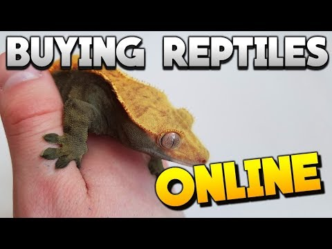 The Best Places To Buy Reptiles Online! Beginners Guide! 2018