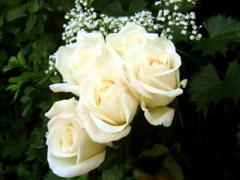 White rose flowers pic collection of flowers to gift in valentine white rose flowers pic collection of flowers to gift in valentine day for your lovers friends mightylinksfo