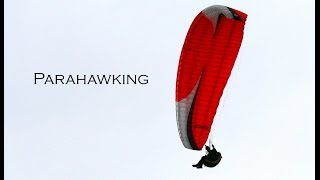 Parahawking with Harris