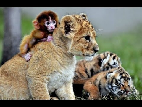 Documentaire animalier sauvage HD