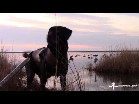 DUCK HUNTING MARYLAND PUBLIC LAND