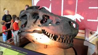A Dinosaur Named Sue Spinning Skull