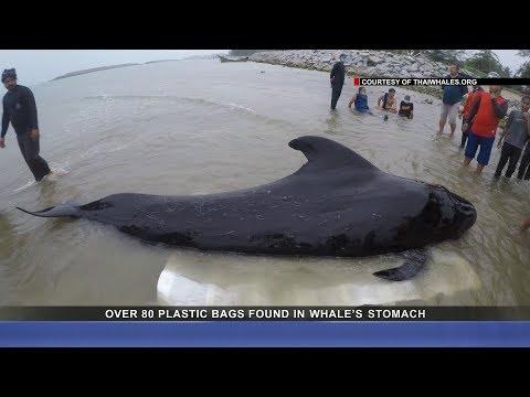Ocean plastic pollution kills precious marine wildlife