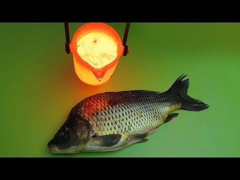EXPERIMENT LAVA vs FISH