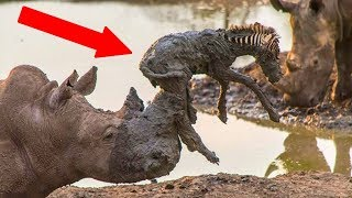 Download Animals SAVING Other Animals! Mp3 and Videos