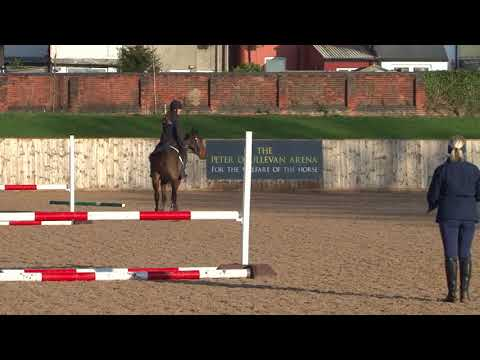 British Showjumping Training - Retraining of Racehorses Part 2