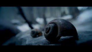 Nature - Emmanuel Lubezki Cinematography - The Revenant