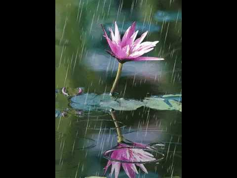 Rain Live Wallpaper with Sounds ☔ Drops on Screen
