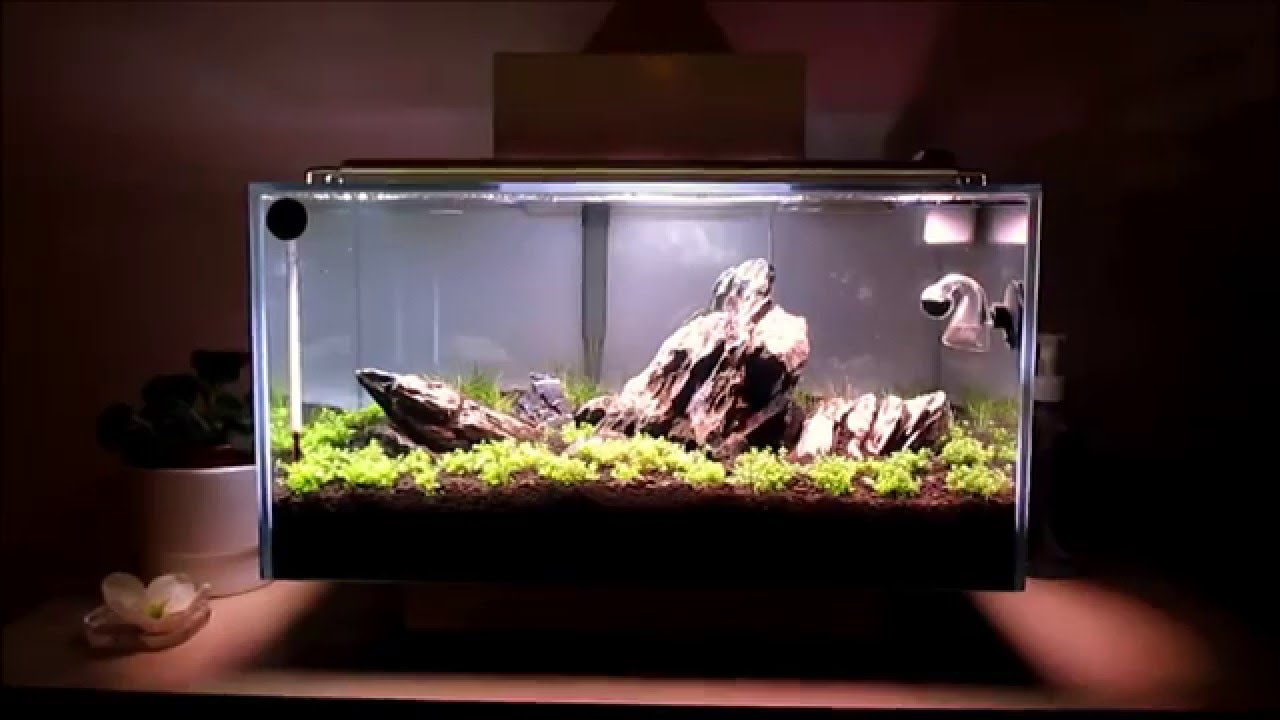 fluval edge aquascape - youtube