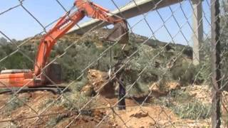 Olive Trees Uprooting in Beit Jala - 17 August 2015