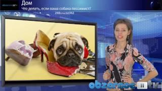 Собака пессимист(Вы знаете, что делает ваша собака, когда остается одна дома? Думаете спит? Тогда вам очень повезло. Некоторые..., 2010-12-08T19:29:08.000Z)