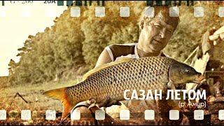 Ловля сазана.  Рыбалка выходного дня.  Рыбалка на диких амурских сазанов