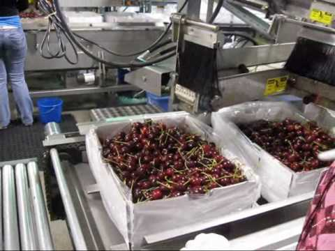 View Fresh Packing Line & Sealing Machines, Orchard View Farms