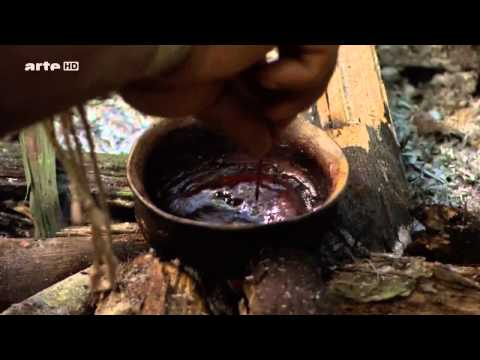 Documentaire Luxuriante Amazonie E01 Le secret de la diversite