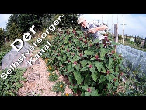 Gartenrundgang 2 0