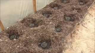 Борьба с мышами на даче: особенности борьбы народными средствами, фото и видео