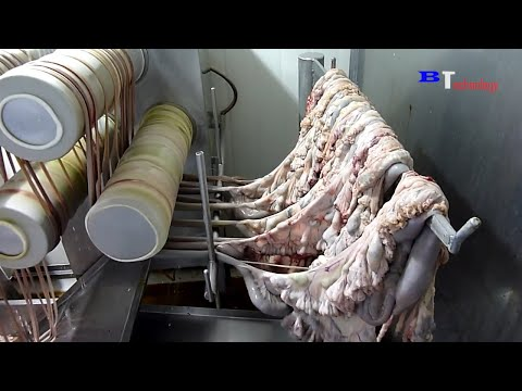 How Are Sausages Produced in Factories, Excellent Food Production and Processing Process