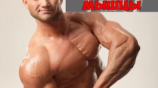 10 фактов о мышцах! Фитнес курсы для тренеров