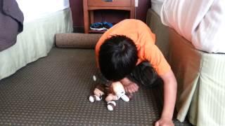 Training Zoomer Dog Some Funny Tricks