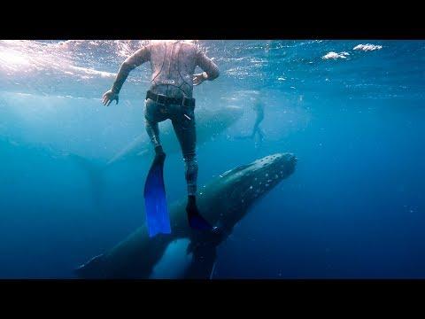 Tonga - Whale Swim - 2017