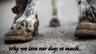 ♥ Why We Love Our Dogs So Much..♥ | Sprotte & Lissy