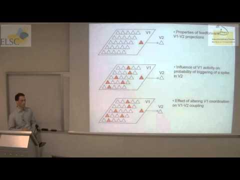ELSC-ICNC Seminar: Adam Kohn