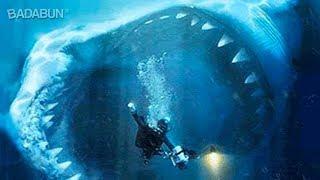 5 Tiburones gigantes captados en cámara