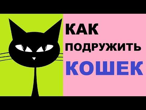 Как подружить кота и котенка в одной квартире